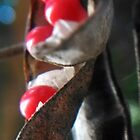 Furling out the red seeds with black caps by Nadia Korths