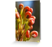 Serpentine Forest Plants Series - Grevillea Greeting Card