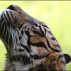 Sumatran Tigress by Thaily