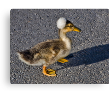 Funny Duckling Canvas Print