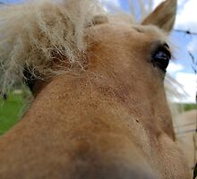 up close and personal by Ranald