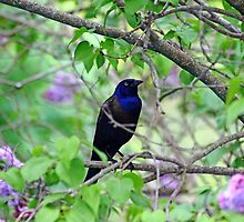 Black Bird Amidst The Lilacs by Debbie Oppermann