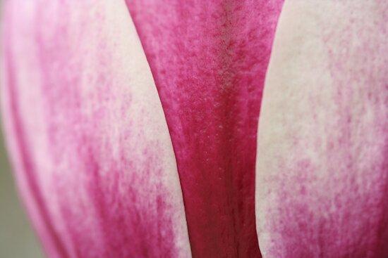 Magnolia petals by Catherine Tranter