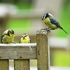 The Blue Tit family by Anthony Hedger Photography