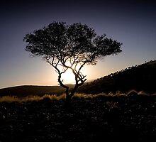 South Australia, Eyre Peninsula Mt.Ive Enbankment sunset by jiashu xu