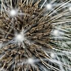 Electric Dandelion by AllshotsImaging