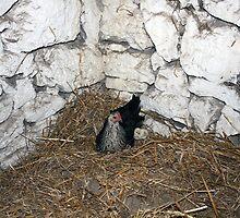 Hen and chicken by John Quinn