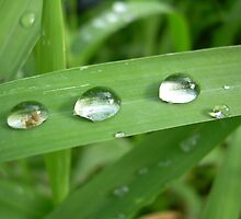 Three Dew Drops..... a river, lake, ocean beginings... by Larry Llewellyn
