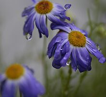 RAIN DROPS KEEP FALLING by Sean Farragher