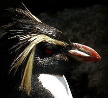 Penguin Portrait by HannahT