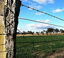 Paddock Fence by Greg Hughes