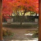 Japanese Maple by WStudios