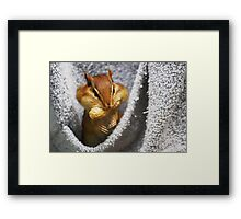 Cheeky Chippie #2 Framed Print