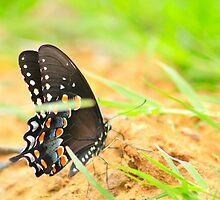 Butterfly Kisses by connie campbell