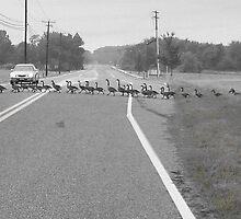 Goose Walking by Terry Schock