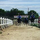 The Great Ostrich Race by Gillen