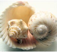 Harmonious shells by ©Maria Medeiros