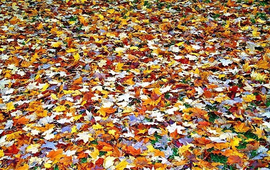 bed of leaves by mychaelalchemy