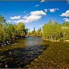 ~ Mountain Wilderness Stream ~ by Tim Denny