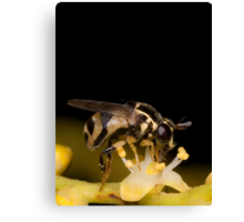 Hoverfly on Palm Flower Canvas Print