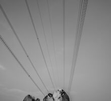 Cows and Wires by TinDog