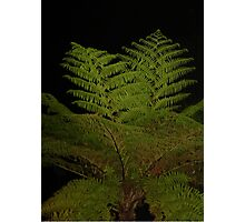 Fern in the Night Photographic Print