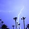 Tropical Palms Trees and a Lightning Thunder Storm, ll  by Bo Insogna