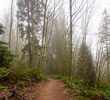 Trail Through a Misty Forest by journeysincolor