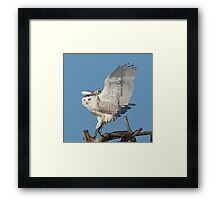Tree dancer Framed Print
