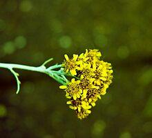 pollen by rocqua