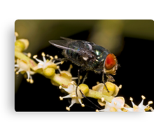 Bluebottle Fly on Palm Flower Canvas Print