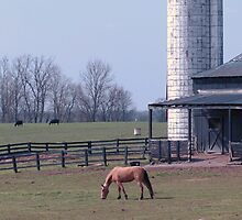 3 black cows and a brown horse by donna.k. nolan