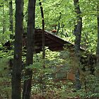 grandma's house in the woods. . . by donna.k. nolan
