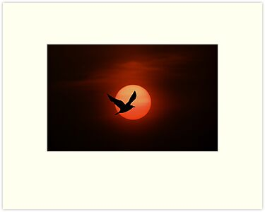 Bird and sun silhouette by Michael Mill