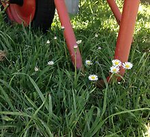 Wheelbarrow and Daisies by Elizaza