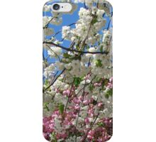 Blue Sky and Beautiful Blossoms iPhone Case/Skin
