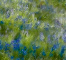 Bluebell Splash by Ann Garrett