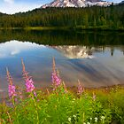 Fireweed Reflections by DawsonImages