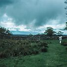Marj investigating Hadrian's wall Milecastle England 198405260046 by Fred Mitchell