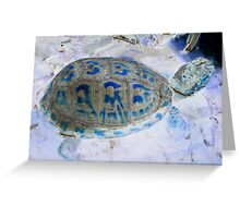 american eastern box turtle from a childs view  Greeting Card
