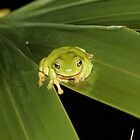 Green Tree Frog in the rain by Stuart Cooney