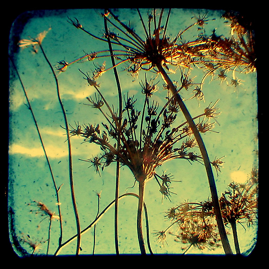 Head in the Clouds - TTV by Kitsmumma