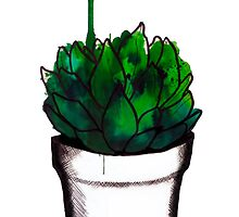 succulent in a pot  by Chauza
