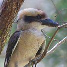 Juvenile Lookout by byronbackyard