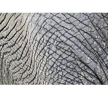 Elephant Skin - Natural Patterns and Textures Photographic Print
