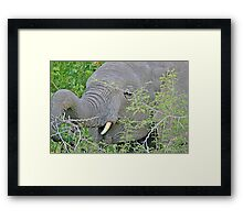 Elephant Hunger - Wildlife Happiness  Framed Print
