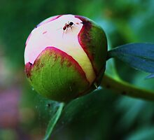 the ant and the flower by teresalynn