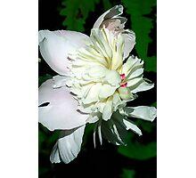 White Peonie Photographic Print