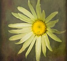Stand Alone - Textured Daisy by SusieBImages