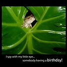I Spy Birthday Frog by Amanda Hall